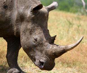 Charge like this rhino!